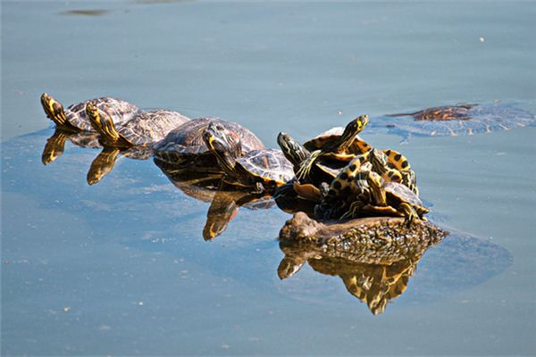 做梦梦见乌龟是什么意思
