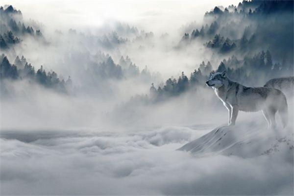 梦见狼是什么意思