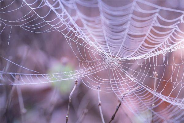 夢見蜘蛛網是什么意思