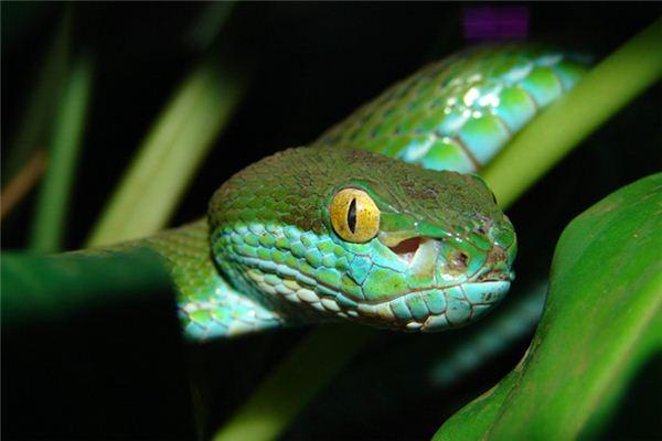 梦见抓蛇是什么意思