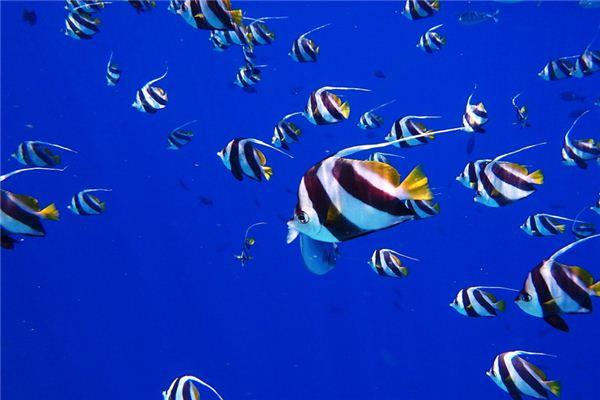 梦见很多鱼是什么意思