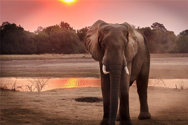 梦见大象是什么预兆