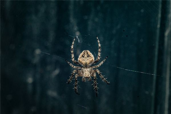 做梦梦到蜘蛛