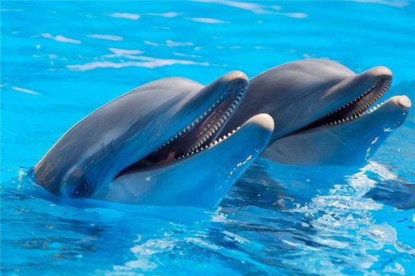 梦见海豚是什么意思