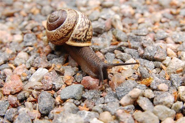 梦见蜗牛是什么意思