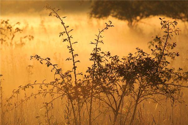梦见灌木是什么意思