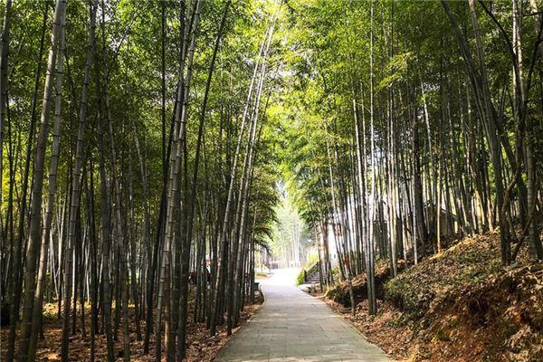 梦见竹子是什么意思