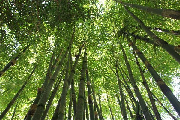 梦见竹林是什么意思