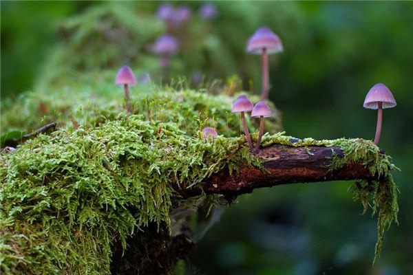 梦见蘑菇是什么意思