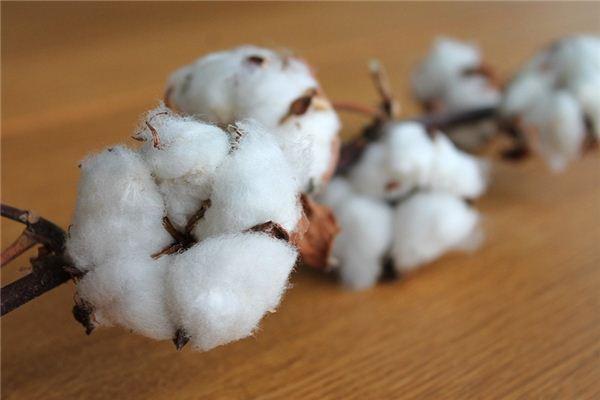 梦见棉花是什么意思