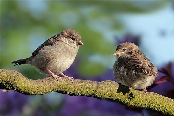 梦见麻雀是什么意思