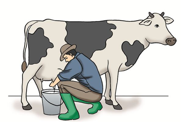 梦见挤奶是什么意思