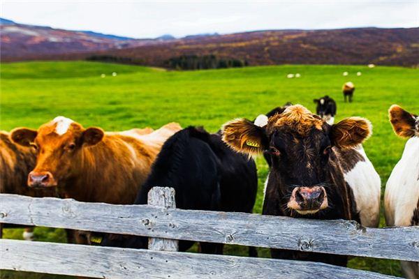 夢見牛柵欄是什么意思