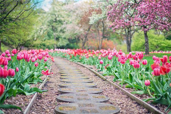 梦见花园是什么意思