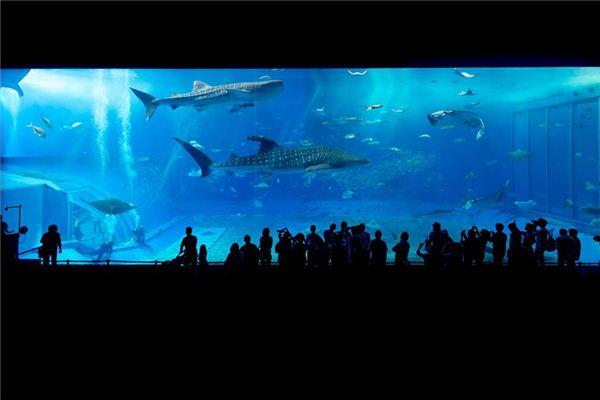 梦见海洋馆是什么意思