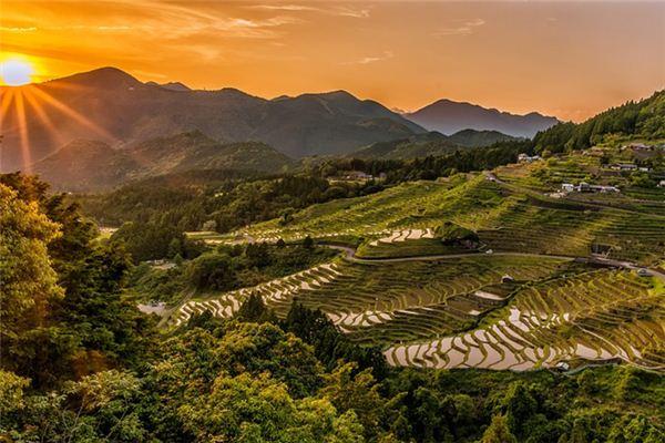 梦见水稻是什么意思