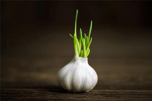 梦见蒜苔是什么意思
