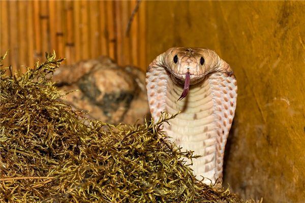 梦见毒蛇是什么意思