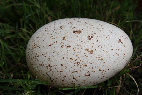 梦见鹅蛋是什么意思