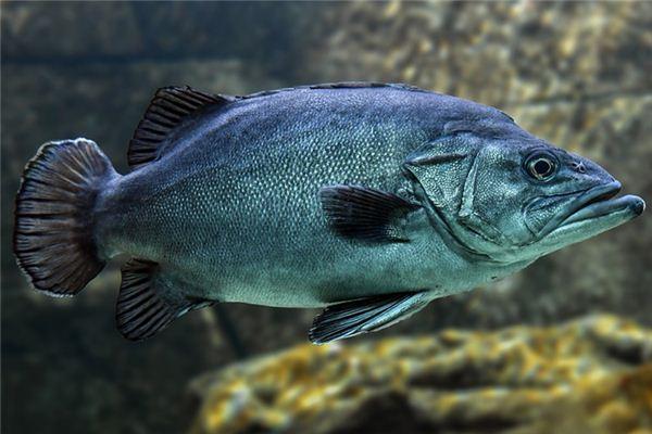 梦见黑鱼是什么意思