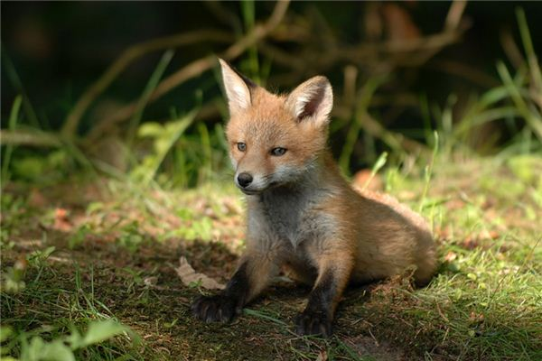 梦见小动物是什么意思