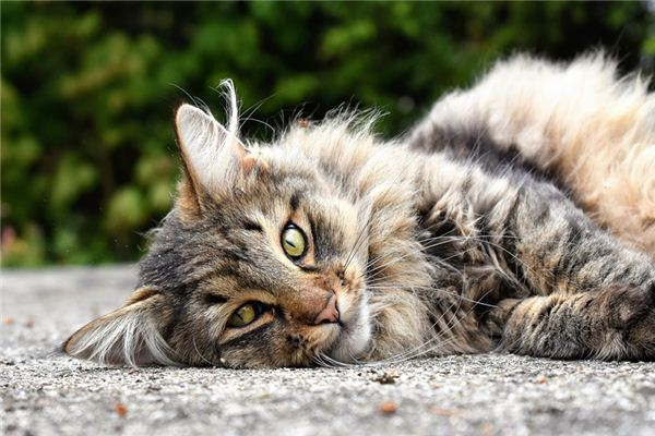 梦见野猫是什么意思