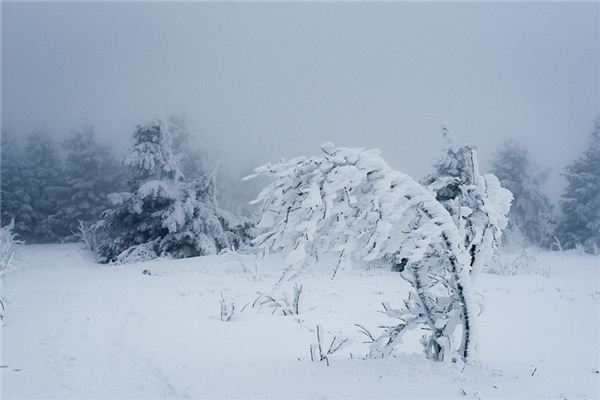 梦见暴风雪是什么意思