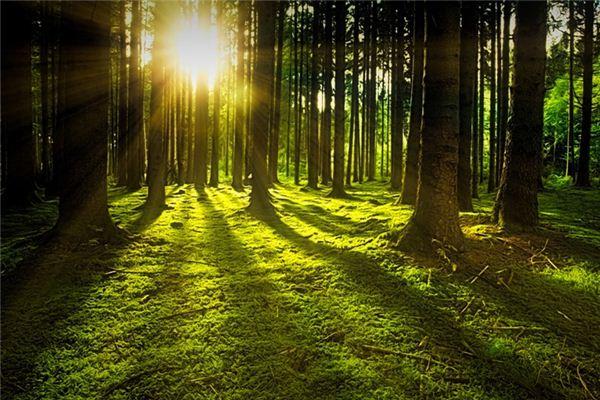 梦见阳光是什么意思