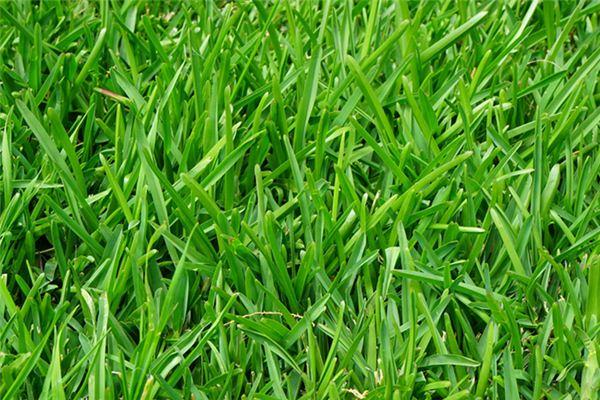 梦见青草是什么意思