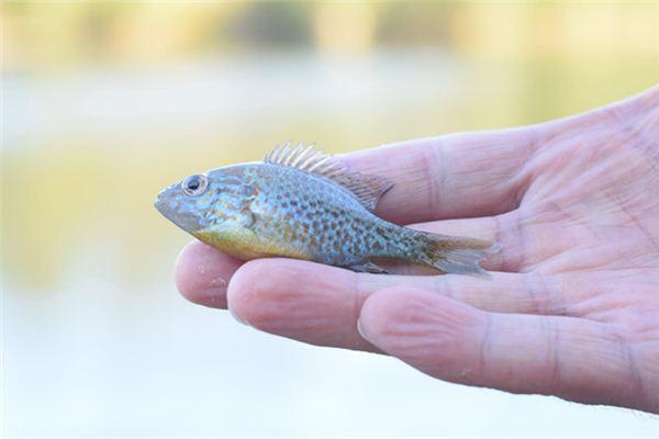 梦见小鱼是什么意思