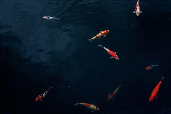 梦见红鲤鱼是什么意思