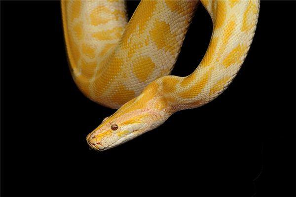梦见黄蛇是什么意思
