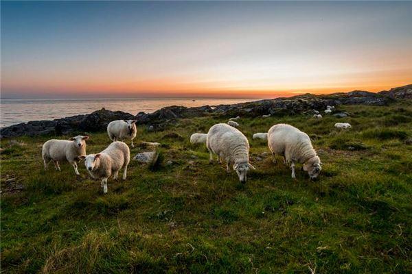 属羊与什么属相不合