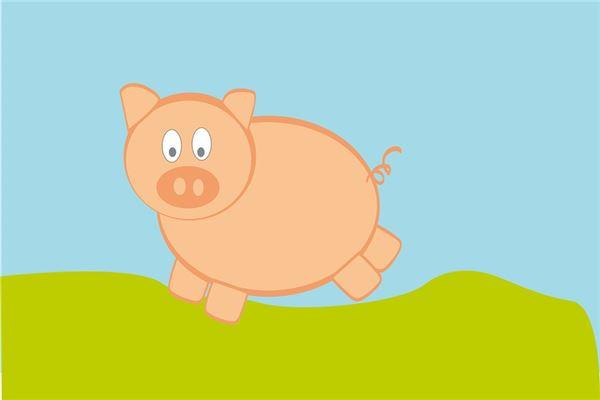 属猪今年运势