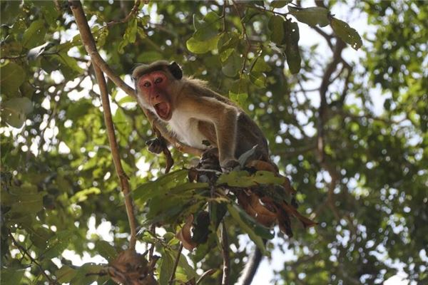 猴年出生的人今年几岁