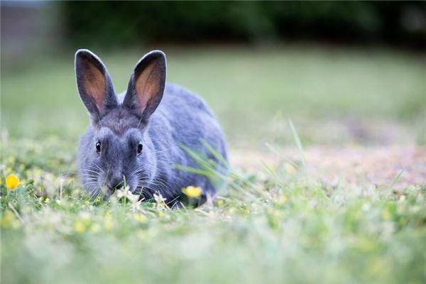 出生腊月的兔是八败命吗