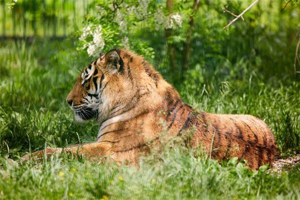 74年属虎的灾难年龄