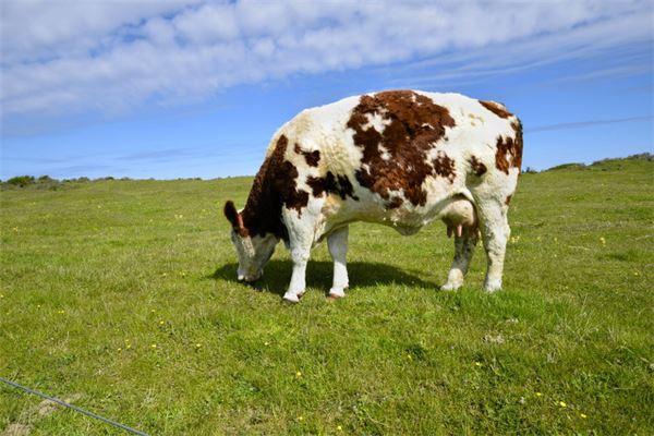 牛人20年每月运势