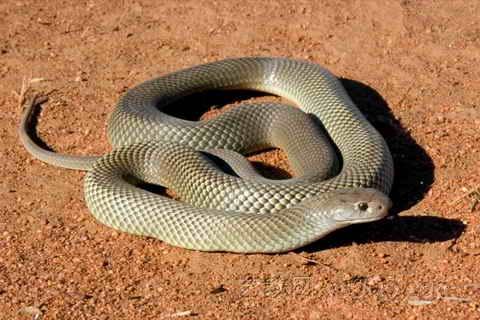 家里好多蛇