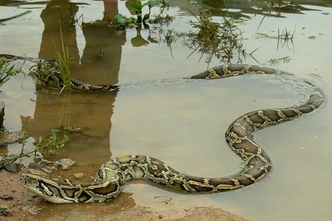 庄闲游戏蟒蛇