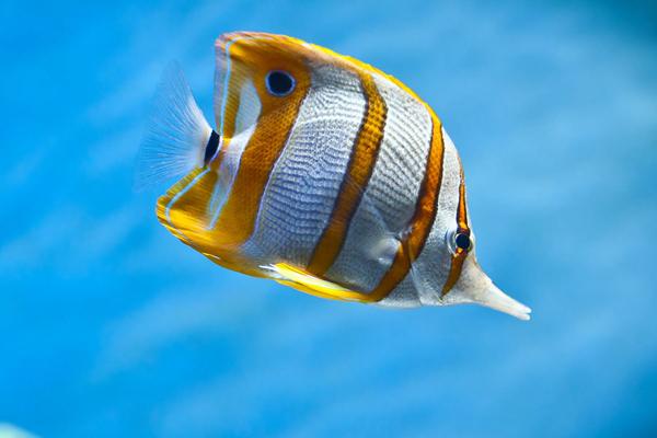 梦见去鱼周公解梦