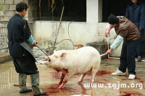 梦见杀猪见血