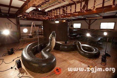 梦见大蟒蛇_周公解梦梦到大蟒蛇是什么意思