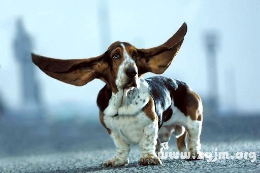 庄闲游戏耳朵