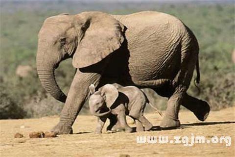 庄闲游戏大象