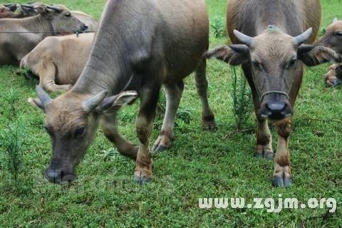 庄闲游戏公牛