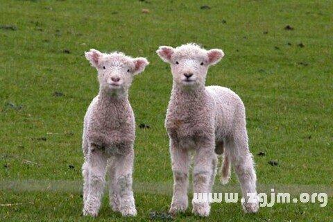庄闲游戏羊