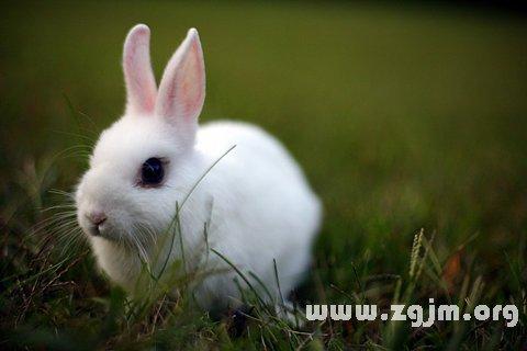 庄闲游戏白兔