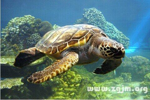 庄闲游戏海龟