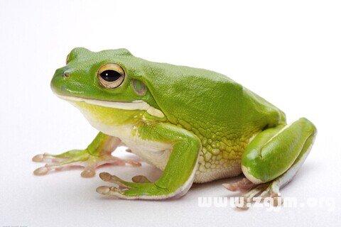 庄闲游戏青蛙